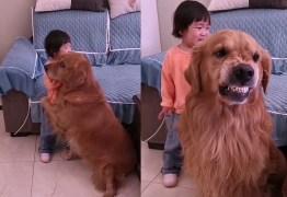 Golden retriever protege menina que chora ao ser repreendida pela mãe e viraliza