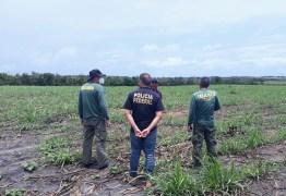 Operação conjunta entre Polícia Federal e Ibama encontrou mais de 45 hectares de terras desmatadas na Paraíba