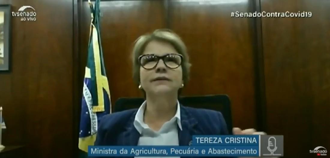 """tereza cristina - Em audiência pública no Senado, ministra da Agricultura diz que desastre das queimadas no Pantanal teria sido """"até menor"""" se houvesse mais gado - VEJA VÍDEO"""
