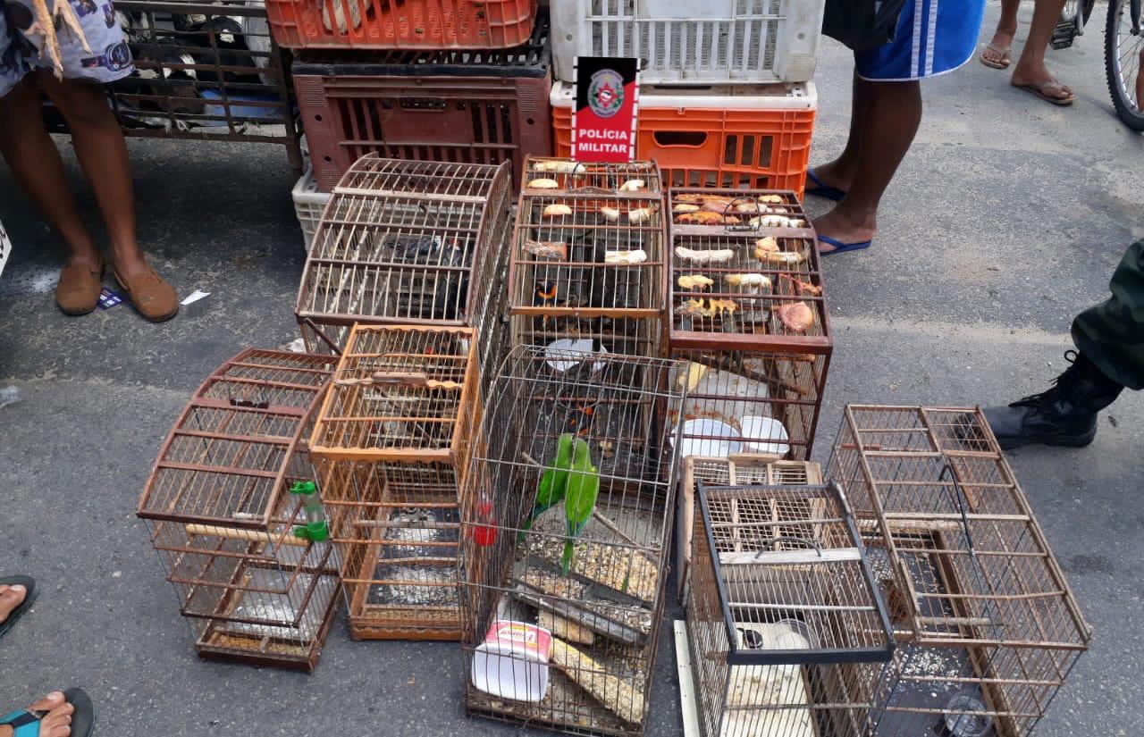 aves apreendidas cg - OPERAÇÃO VOO LIVRE: Polícia Militar apreende 75 aves silvestres em Campina Grande