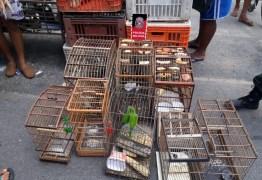 OPERAÇÃO VOO LIVRE: Polícia Militar apreende 75 aves silvestres em Campina Grande