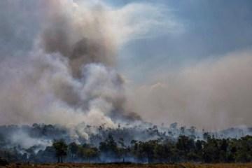 des - Em novo recorde, desmatamento na Amazônia cresce 9%