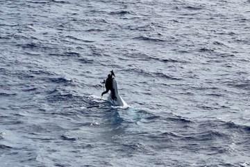 stuart bee 1 - Homem é encontrado em alto mar agarrado ao casco de seu barco um dia após naufragar na costa da Flórida; veja imagens
