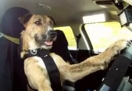 Após bater o carro, mulher se recusa a fazer teste do bafômetro e alega que cachorro dirigia o veículo