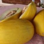 WhatsApp Image 2021 01 17 at 10.04.40 1 - Agricultura em destaque: prefeitura de Monte Horebe desenvolve projeto para cultivo comercial do melão