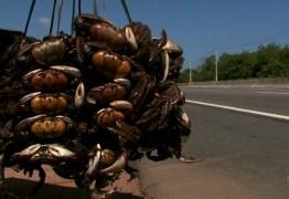 Começa nesta quinta-feira (14), período de defeso do caranguejo-uçá, na Paraíba