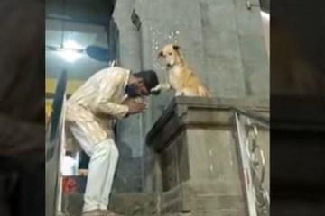 Vira-lata caramelo 'abençoa' fiéis na saída de templo na Índia – VEJA VÍDEO