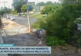Motociclista sai ileso ao passar em avenida durante queda de árvore; VEJA VÍDEO