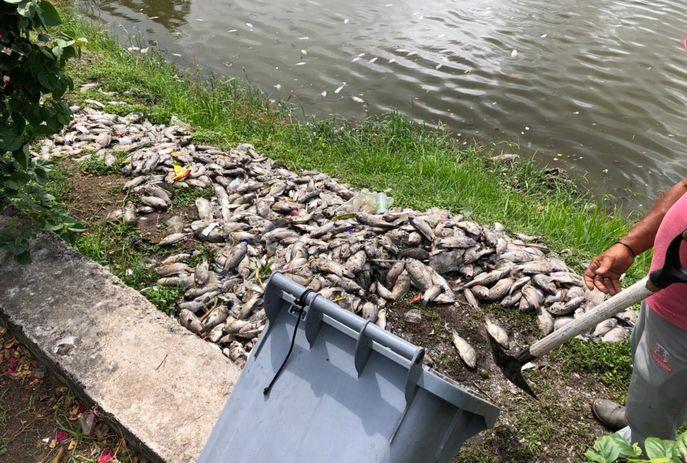 csm peixes mortos 05 02 3880e28e16 - Esgoto clandestino causou morte de centenas de peixes no Parque Solón de Lucena