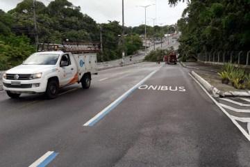 ATENÇÃO: Árvore de grande porte cai na Av. Pedro II e trânsito precisa ser desviado em João Pessoa