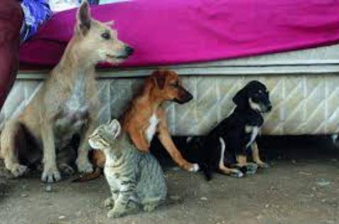 Resultado de imagem para Prefeitura de Santa Rita emite nota de repúdio a fake news sobre cremação e eutanásia de animais