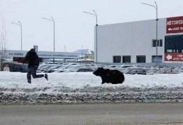 Urso foge de hotel e persegue homem que falava ao celular