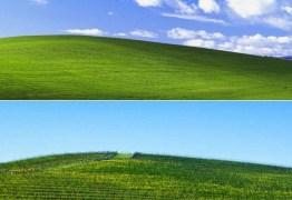 Editor acha local exato de icônico papel de parede do Windows XP