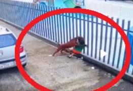 IMAGENS FORTES: Vídeo flagra ataque brutal de pitbull à menina que brincava com cachorrinho