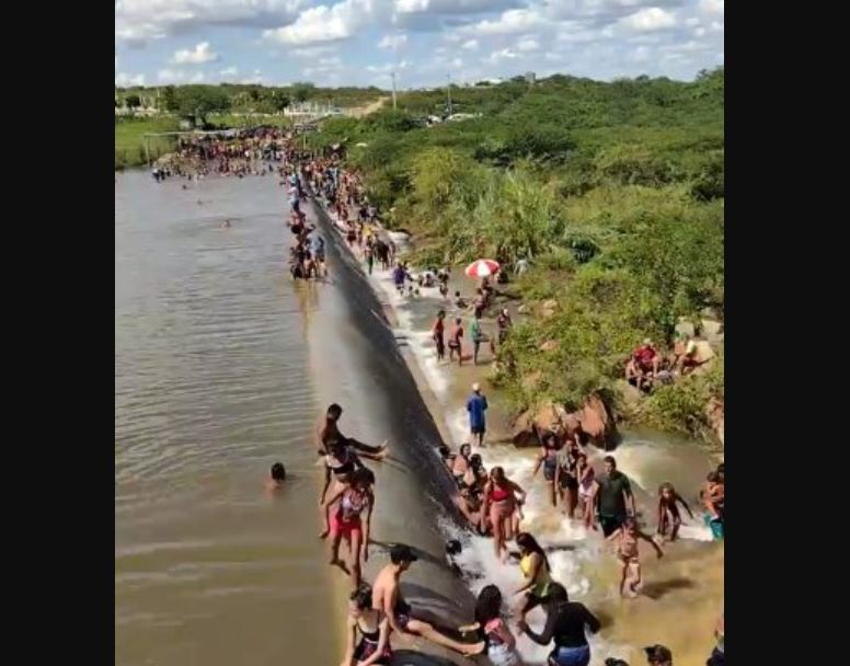 Capturar.JPGujj 1 - CORONAVÍRUS: Banhistas ignoram pandemia e lotam açude de Taperoá