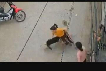 """Mulher leva """"rasteira"""" de cachorro enquanto conversava com as vizinhas"""