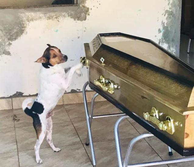 cacho - Criado como um filho, cachorro chora e acompanha velório da tutora ao lado do caixão