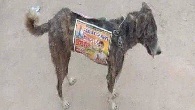 xblog dog.jpg.pagespeed.ic .wyT gJIxL5 - Candidatos na Índia usam cães de rua como 'cabos eleitorais'