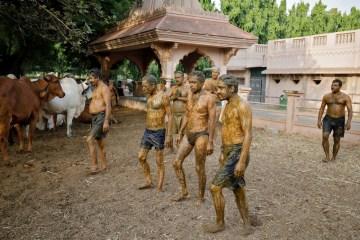 2021 05 09t005846z 1225400754 rc20cn909tlz rtrmadp 3 health coronavirus india cows - Médicos da Índia pedem para que pessoas do país não usem esterco bovino contra a Covid-19 - VEJA VÍDEO