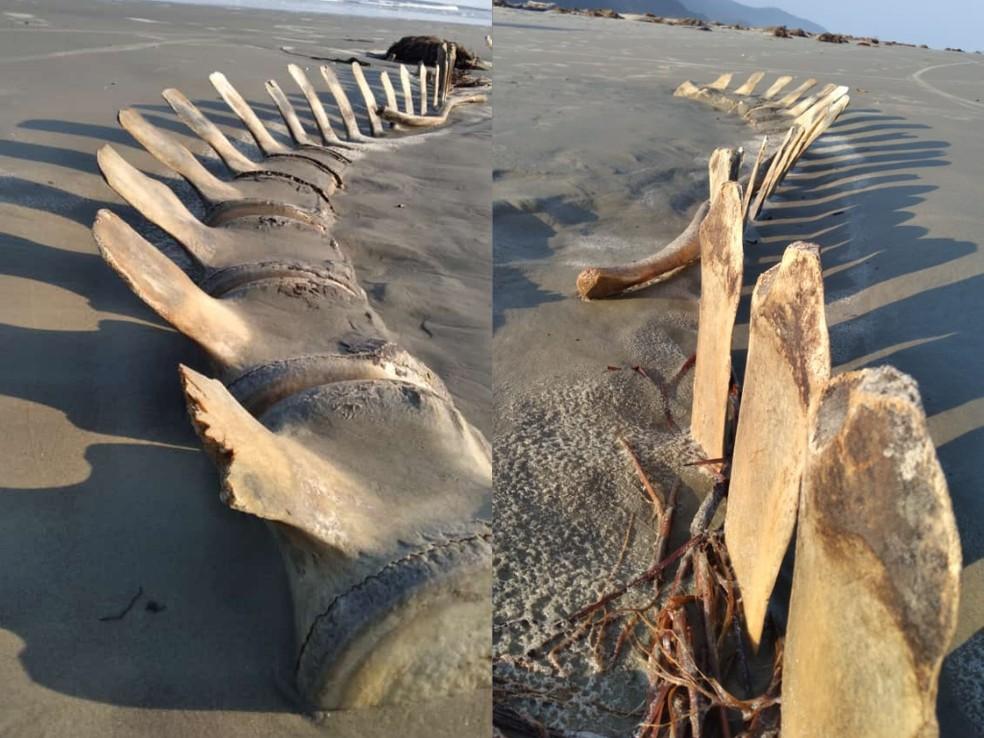 esqueleto 1 - MISTÉRIO! Esqueleto gigante desenterrado em praia some misteriosamente