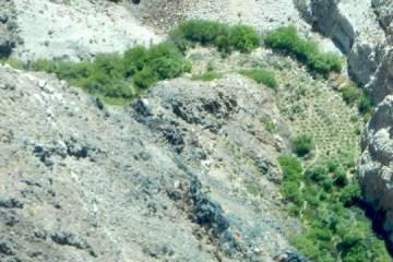 Grande número de pés de maconha é achado em cânion no Vale da Morte