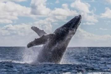 A incrível história do pescador que sobreviveu após ser 'engolido' e cuspido por uma baleia