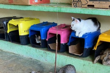 portal correio 16062021070144506 - Centro de Zoonoses realiza semana de adoção de cães e gatos em Campina Grande