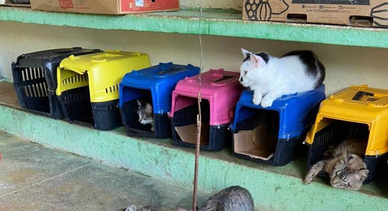 Centro de Zoonoses realiza semana de adoção de cães e gatos em Campina Grande