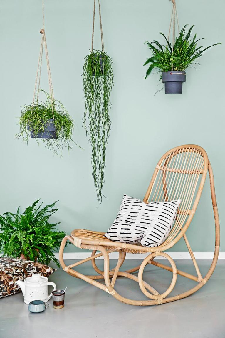 3 Pet-Safe Plants That are Pretty, Too || www.PolishedClosets.com
