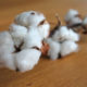Nigerian president to bring back cotton industry to country