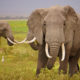Botswana's Department of Wildlife and National Parks issues 86 elephant hunting licences