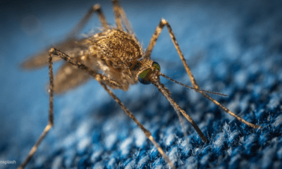 Malaria continues to be the most prevalent health challenge in Nigeria