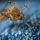 Malaria claims 655 lives in first quarter of 2019 in Mozambique