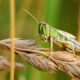 Kenya commences with aerial pesticide spraying to contain locust invasion