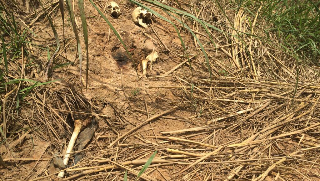 L'Onu annonce la découverte de 38  nouvelles fosses communes dans le Kasaï