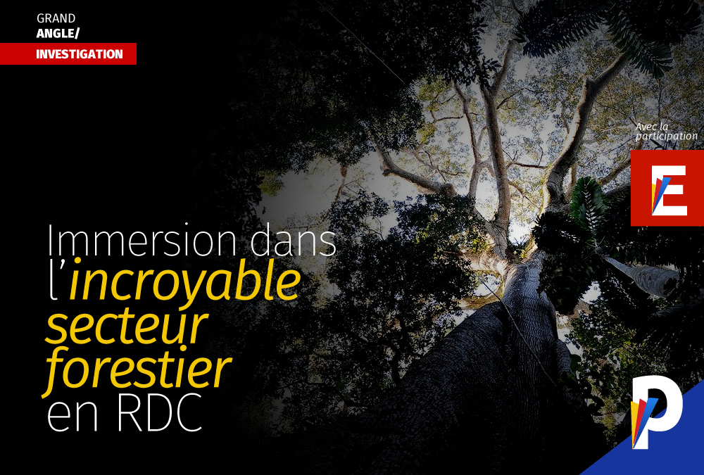 Immersion dans secteur le forestier en RDC