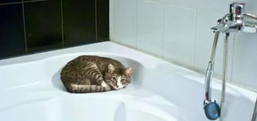 jak wykapac kota