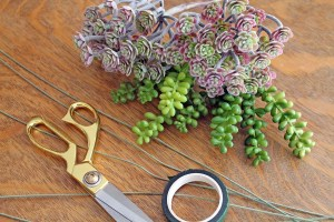 succulent napkin rings | oplka dots and picket fences