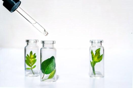 ekstrakty roślinne w kosmetykach