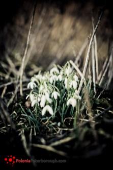 pierwszy wiosenny dzień w 2012