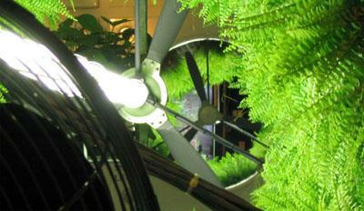 Ventiladores en Jardín Botánico