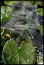 digital photo collage Water