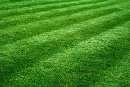 trimmed and maintained lawn
