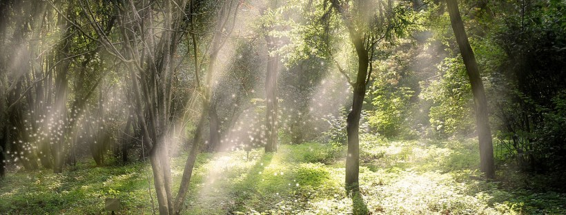Sunbeams in a forest - pace yourself and go for a walk!