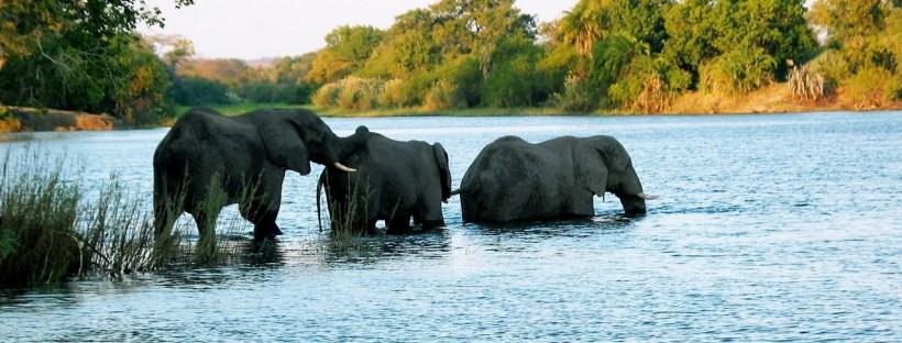 Elephants (not the Evernote elephant)