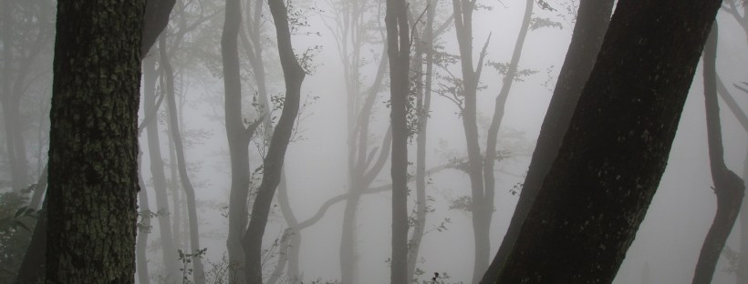 A dark forest, a good setting for an Anki horror story, perhaps? Picture from freeimages.com