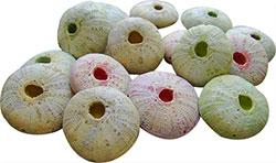 Powers urchin bead