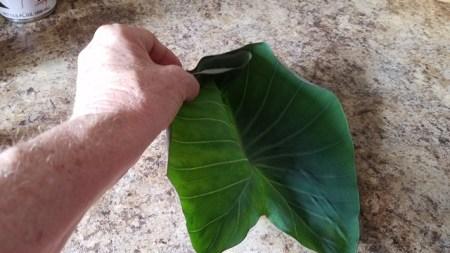 Folding the taro leaf