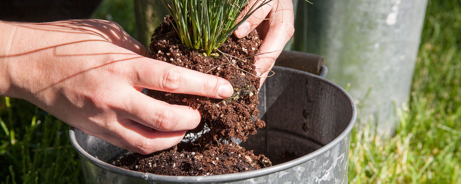 Potting-Plant-Final-Potted-Plant-FEATURED