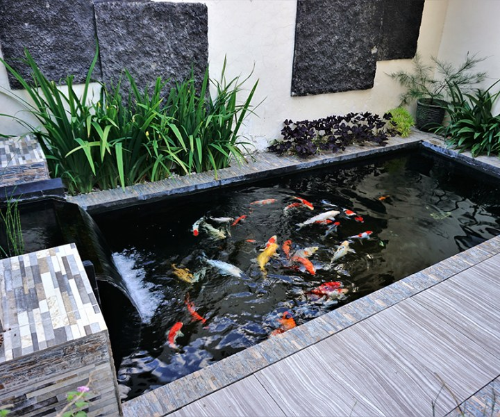 minimalist koi fish pond from top view, suitable for the backyard of the house